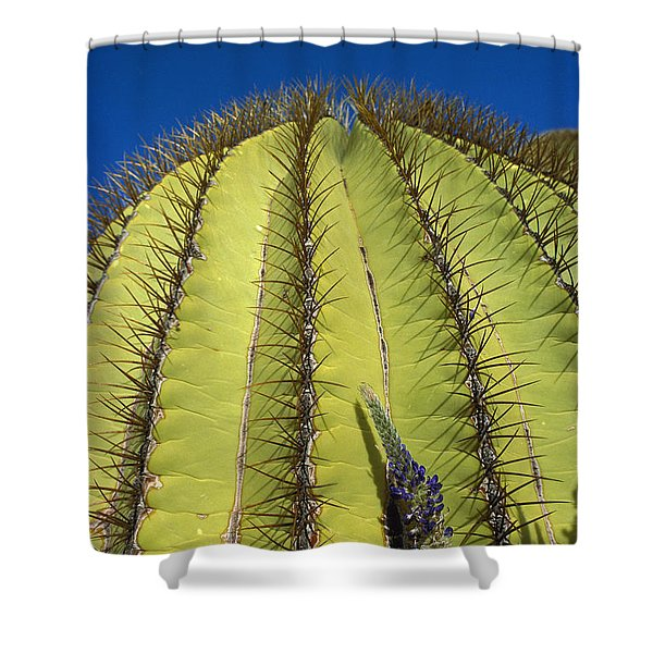 Giant Barrel Cactus Ferocactus Diguetii Shower Curtain by Tui De Roy