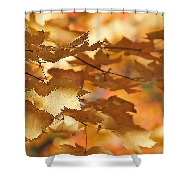 Golden Light Autumn Maple Leaves Shower Curtain by Jennie Marie Schell