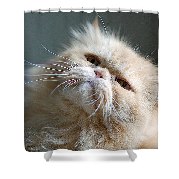Gracie Shower Curtain by Lisa  Phillips