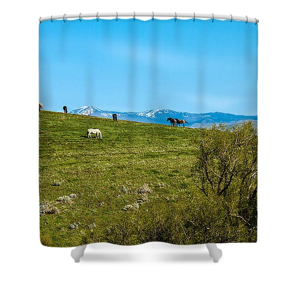 Grazing Horses Shower Curtain by Robert Bales