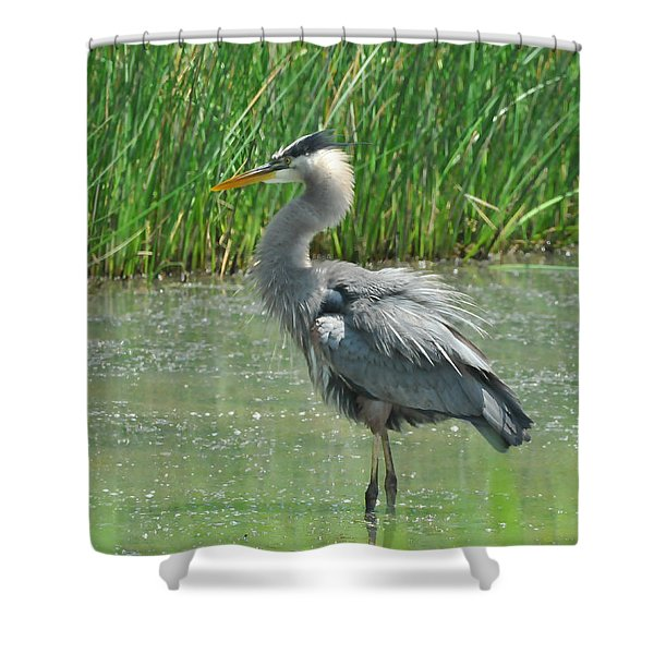 Great Blue Heron Shower Curtain by Paul Ward