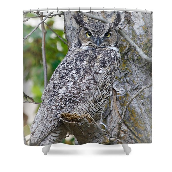 Great Horned Owl II Shower Curtain by Athena Mckinzie