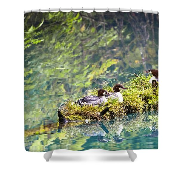 Grebe Podicipedidae Birds Sitting On A Shower Curtain by Richard Wear