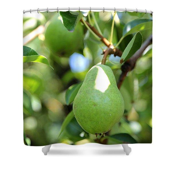 Green Pear Shower Curtain by Carol Groenen