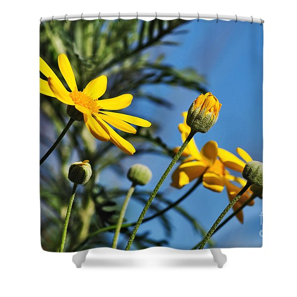 Happy Daisies Shower Curtain by Kaye Menner