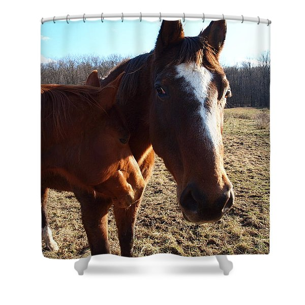 horse neck Shower Curtain by Robert Margetts
