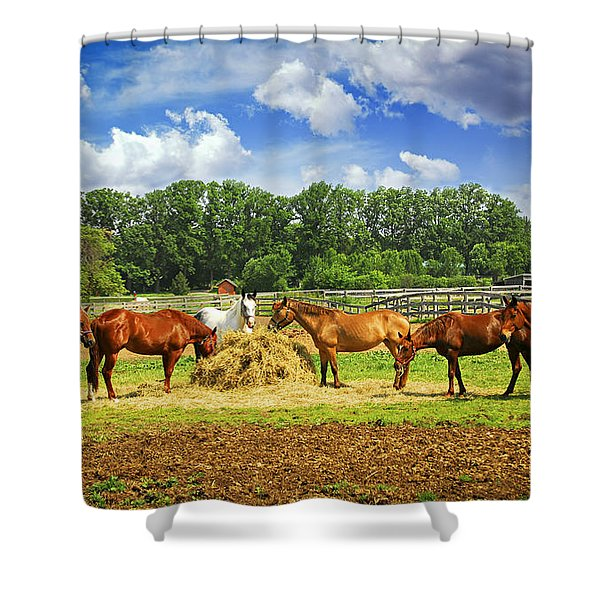 Horses at the ranch Shower Curtain by Elena Elisseeva