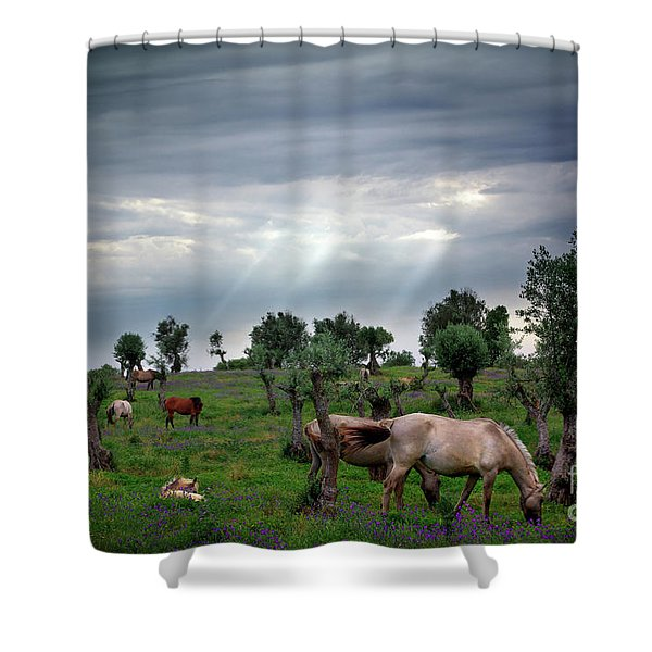 Horses Eating Shower Curtain by Carlos Caetano