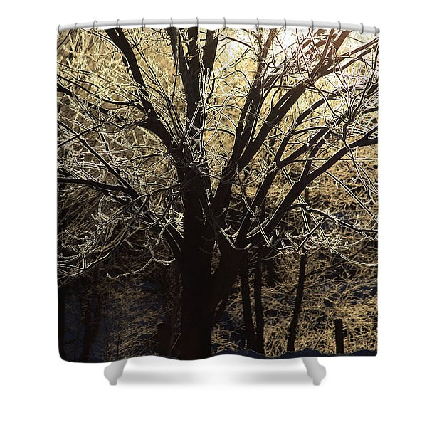 Iced Shower Curtain by Karol  Livote