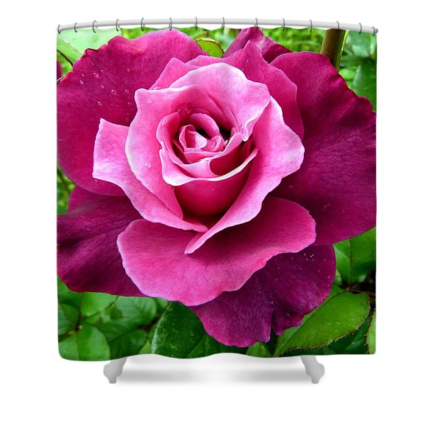 Intrigue Rose Shower Curtain by Will Borden