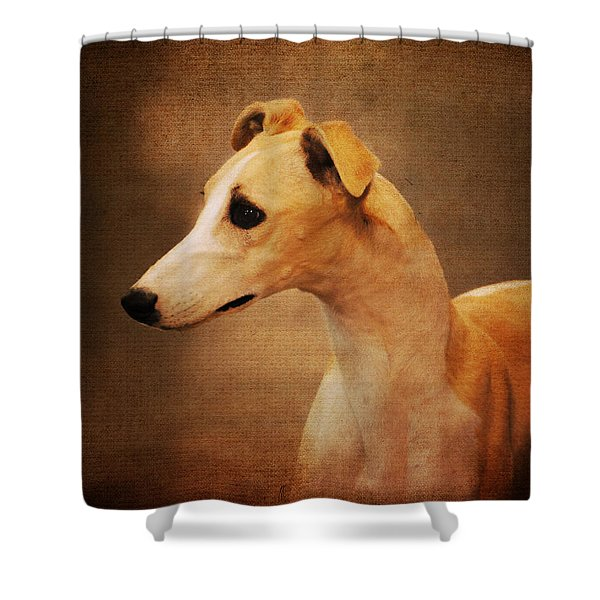 Italian Greyhound Shower Curtain by Jai Johnson