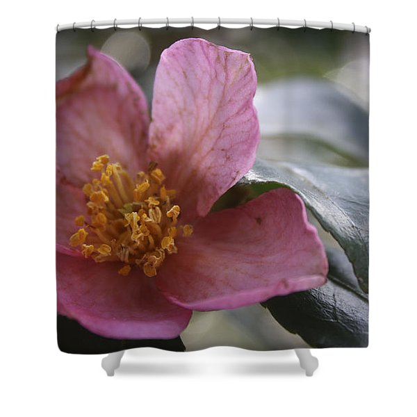January Camelia 2 Shower Curtain by Teresa Mucha