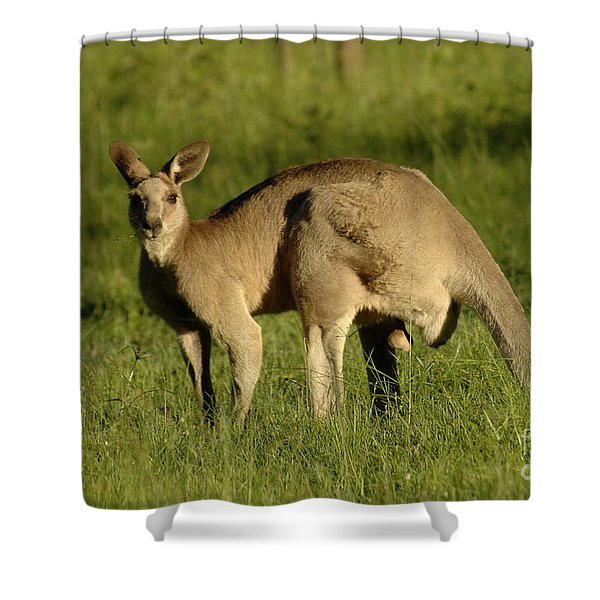 Kangaroo Male Shower Curtain by Bob Christopher