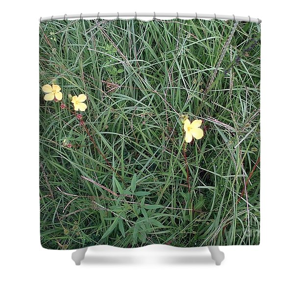 Kiiroi Hana Shower Curtain by George Pedro
