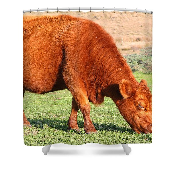 Landscape With Cow Grazing In The Field . 7D9926 Shower Curtain by Wingsdomain Art and Photography