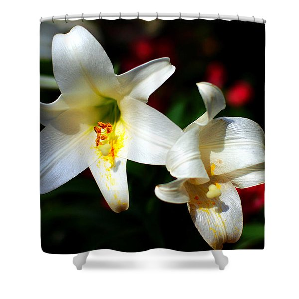 Lilium Longiflorum Flower Shower Curtain by Paul Ge