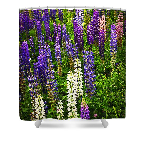 Lupins In Newfoundland Meadow Shower Curtain by Elena Elisseeva