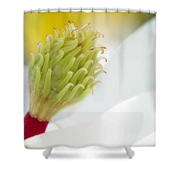 Magnificant Magnolia Macro Shower Curtain by Sabrina L Ryan