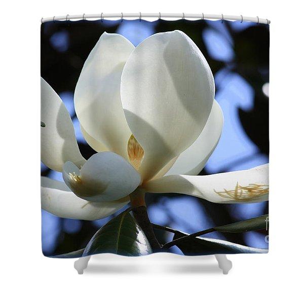 Magnolia in Blue Shower Curtain by Carol Groenen