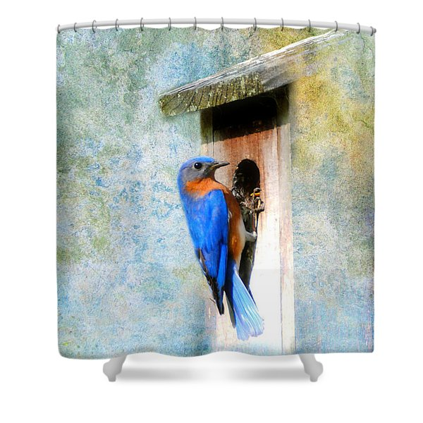Male Eastern Bluebird At Nesting Box Shower Curtain by Jai Johnson