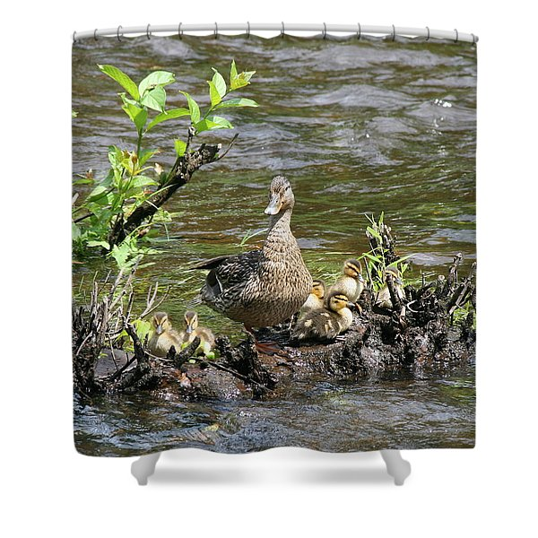 Mallard Duckling Rest  Shower Curtain by Neal  Eslinger