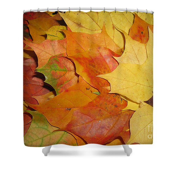 Maple Rainbow Shower Curtain by Ausra Paulauskaite