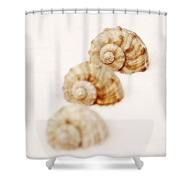 marine snails Shower Curtain by Joana Kruse