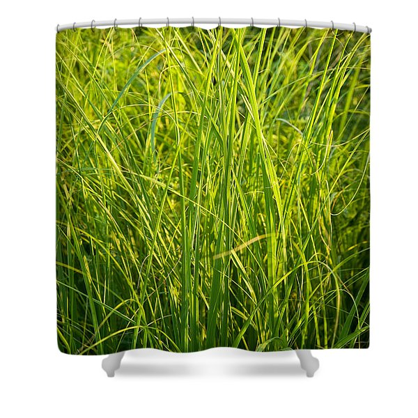 Midwest Prairie Grasses Shower Curtain by Steve Gadomski