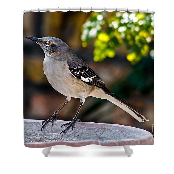Mocking Bird Shower Curtain by Robert Bales