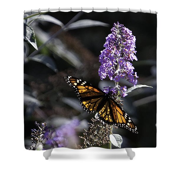 Monarch in Backlighting Shower Curtain by Rob Travis