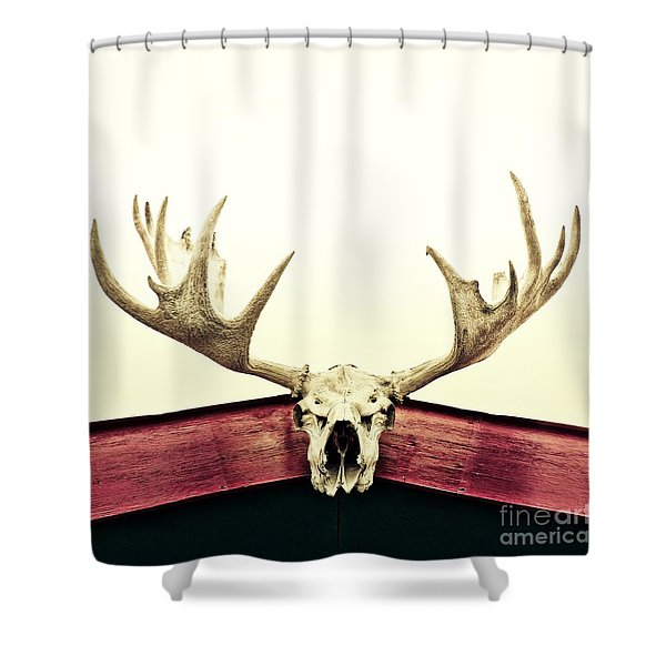moose trophy Shower Curtain by Priska Wettstein