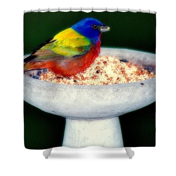 My Painted Bunting Shower Curtain by KAREN WILES