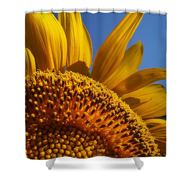 My Pretty Shower Curtain by Skip Hunt