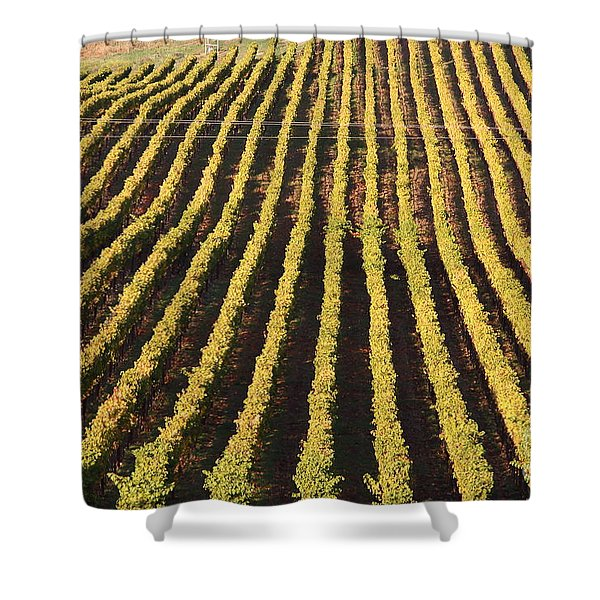 Napa Valley Vineyard . 7d9061 Shower Curtain by Wingsdomain Art and Photography