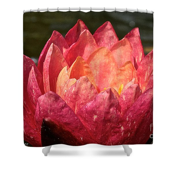 Nymphaea Profile Shower Curtain by Susan Herber