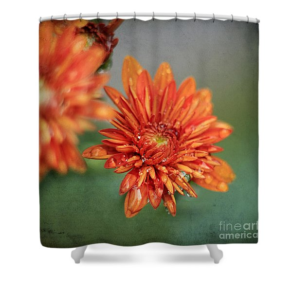 October Mums Shower Curtain by Darren Fisher