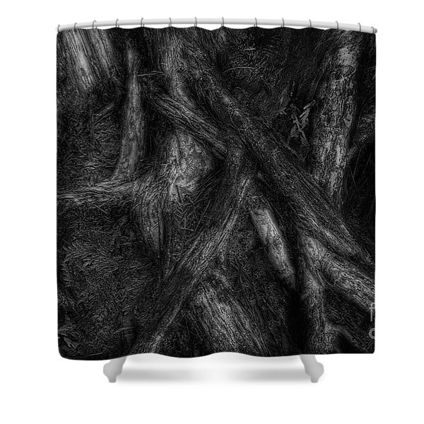 Old Silvery Roots Shower Curtain by David Gordon