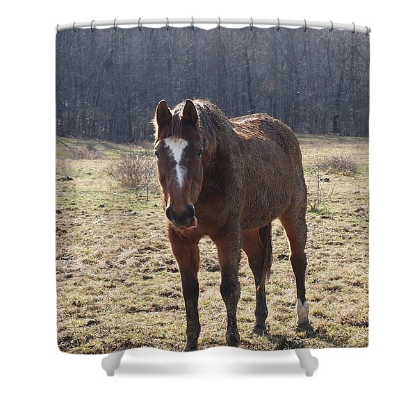 One Funny Horse Shower Curtain by Robert Margetts