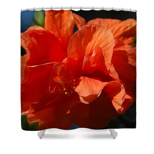 Orange Hibiscus Shower Curtain by Aimee L Maher Photography and Art