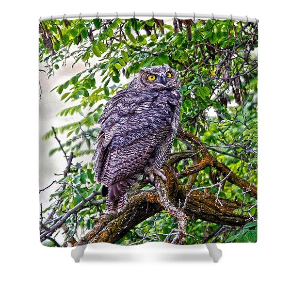Owl In A Tree Shower Curtain by Athena Mckinzie