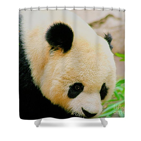 Panda Shower Curtain by Cheryl Young