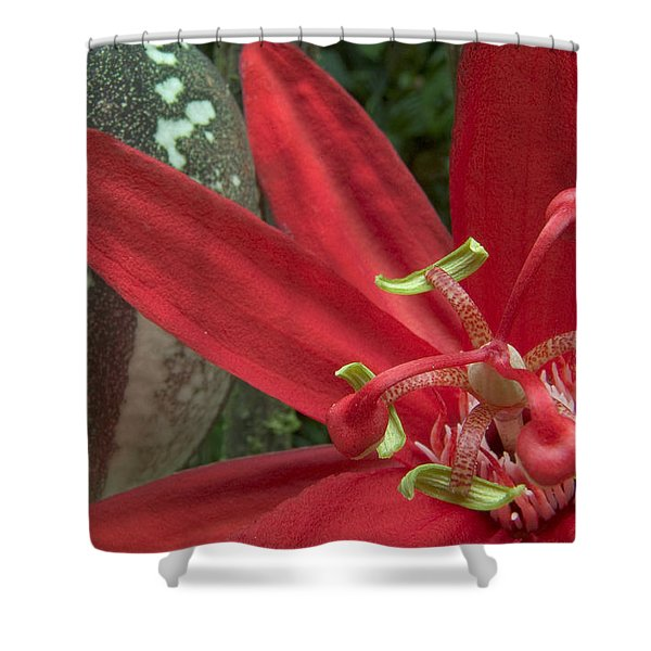 Passion Flower Blossom Costa Rica Shower Curtain by Piotr Naskrecki
