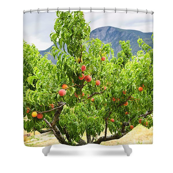 Peaches on tree Shower Curtain by Elena Elisseeva