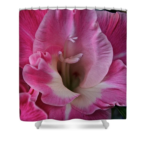 Perfectly Pink Shower Curtain by Susan Herber