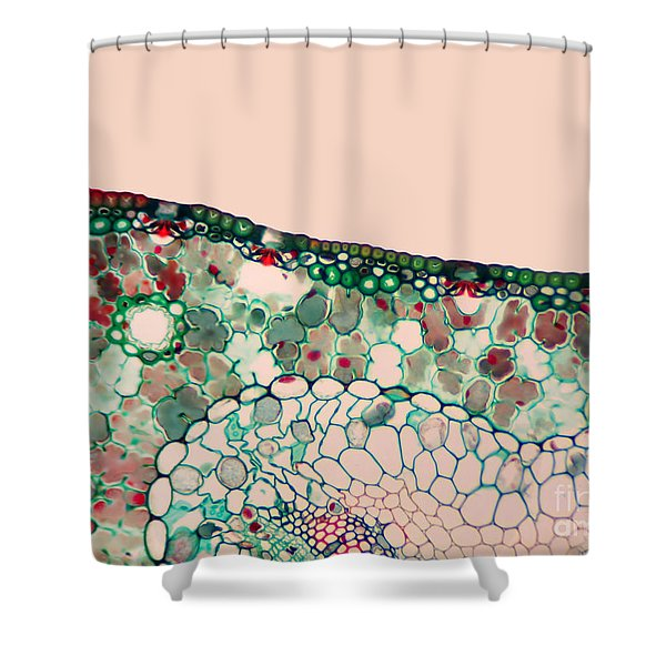 Pine Needle Light Micrograph Shower Curtain by Gary DeLong and Photo Researchers