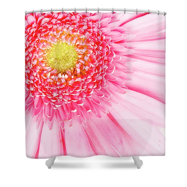 Pink Delight II Shower Curtain by Tamyra Ayles