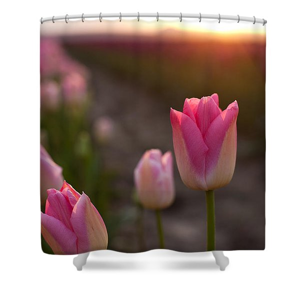 Pink Glory Shower Curtain by Mike Reid