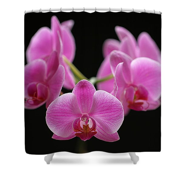 Pink March Madness Shower Curtain by Juergen Roth