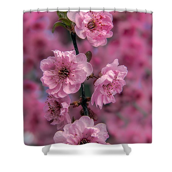 Pink On Pink Shower Curtain by Robert Bales