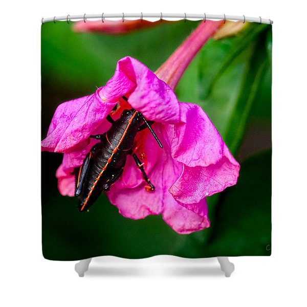 Pit Stop Shower Curtain by Christopher Holmes